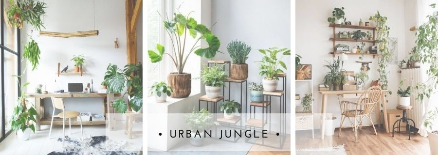 cabecera blog Urban Jungle